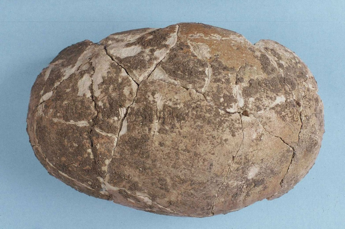 Fig. 35. The skull of the Upper Palaeolithic dating from approximately 14500 BC.