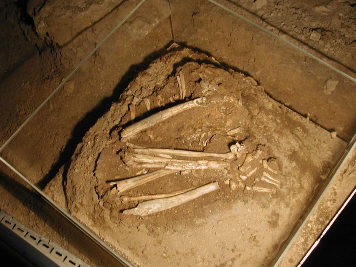 Fig. 39. Mesolithic burial (trench Ι5/Ι6) preserved in situ in cave.