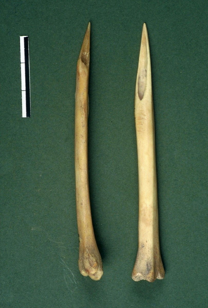 Fig. 28. Two intact bone awls, made of the long bones of small animals.