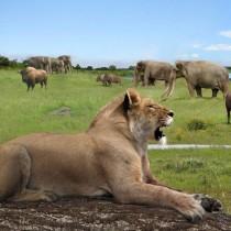 Extinction of Pleistocene herbivores induced major vegetation and landscape changes