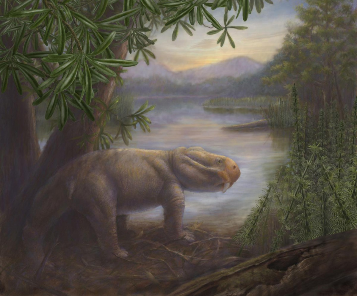 The ancient mammal Lystrosaurus, a survivor of the Permian-Triassic mass extinction, is shown standing on the shore of a lake in the Karoo Basin of South Africa. [Credit: Marlene Donnelly]