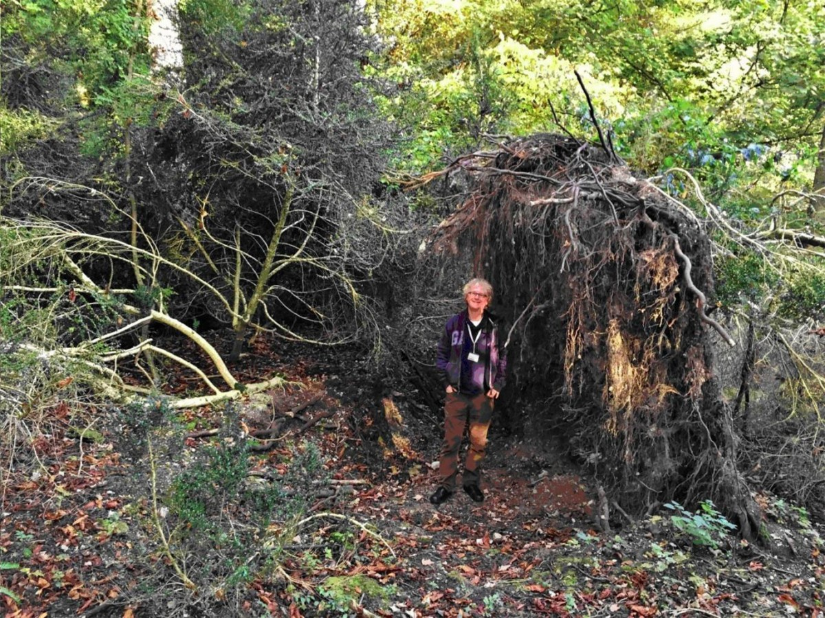 A fallen tree which forms the wall of a Stone Age 'eco-home' near Stonehenge David Jacques/Buckingham University.