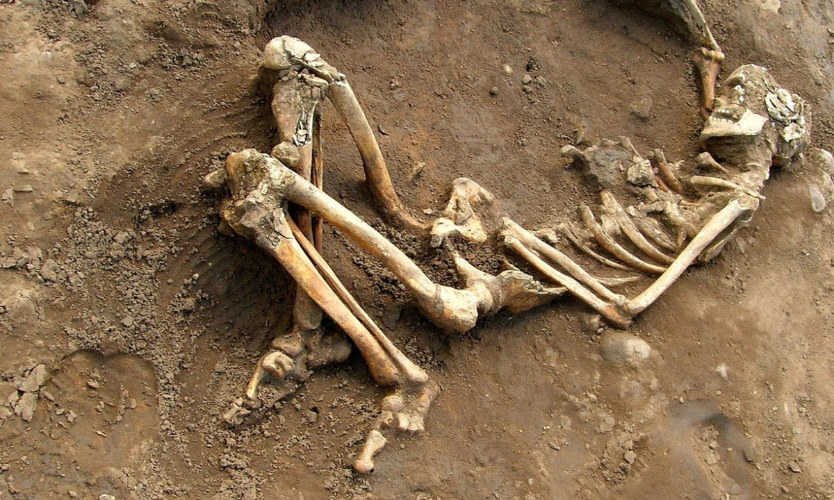The stories of Roman lives are written on the bones: Roman skeleton found at York University campus. Photo Credit: University of York/PA.