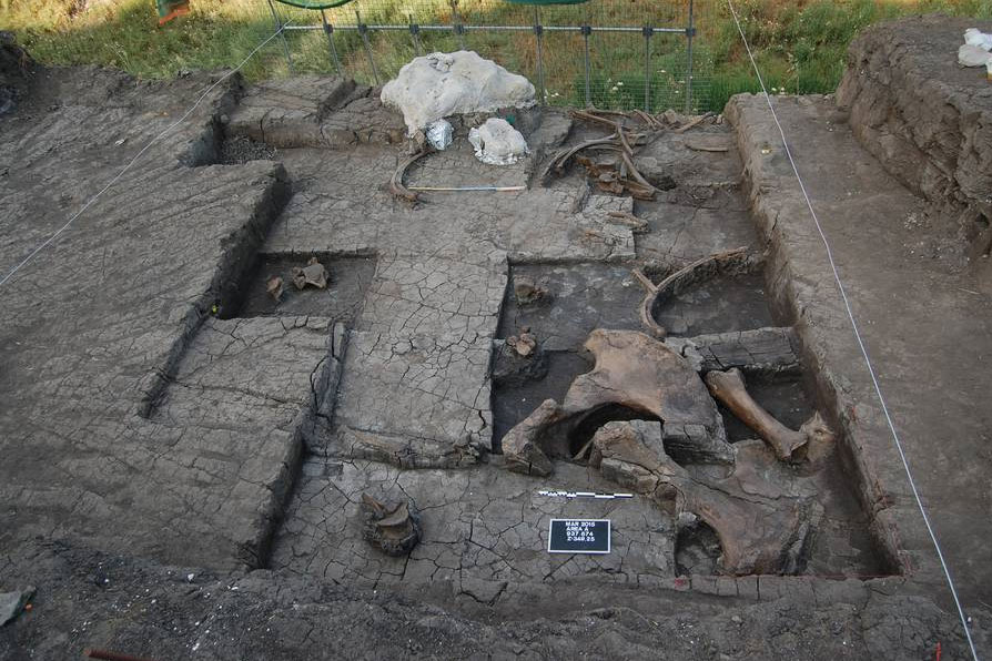 Excavation with some of the elephant bones exposed. Visible in the background - the elephant skull, treated with plaster to preserve it. Photo: Greek Ministry of Culture