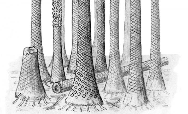 Reconstructed drawing of Svalbard fossil forest. Credit: Dr Chris Berry - Cardiff University.
