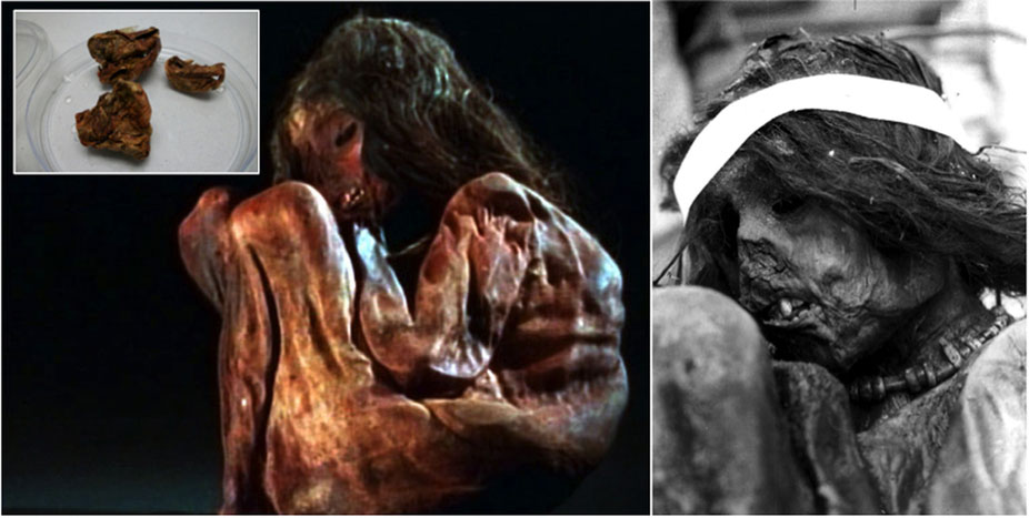 The Aconcagua mummy. Photo Credit: Nature/Scientific Reports.