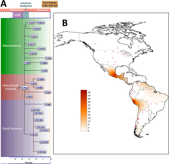 The geographic distribution of C1b13 also fits well with the expansion of the Inca Civilization into the northern territories of Chile although its age is much older, thus suggesting that perhaps only some (still un-sampled) sub-lineages of C1bi might be related to the Inca's timeline. Image Credit: Nature/Scientific Reports.