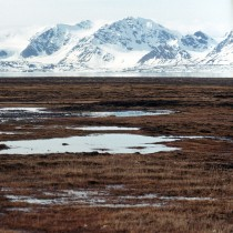 Tropical fossil forests unearthed in Arctic Norway