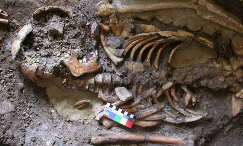 DNA was extracted from the molar teeth of this skeleton, dating from almost  10,000 years ago and found in the Kotias Klde rockshelter  in Western Georgia [Credit: Eppie Jones].