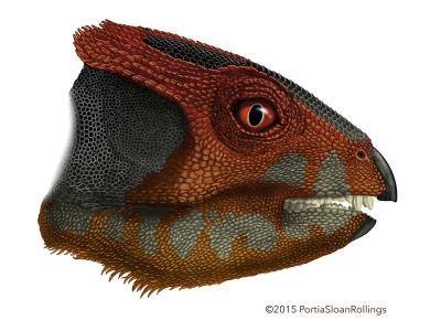 Researchers have described a new species of plant-eating dinosaur, Hualianceratops wucaiwanensis, that stood on its hind feet and was about the size of a spaniel. Credit:Portia Sloan Rollings.