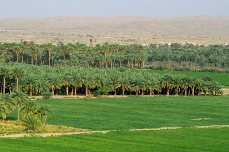 The Jiroft plain – the fertile oasis of an early civilization in Iran.