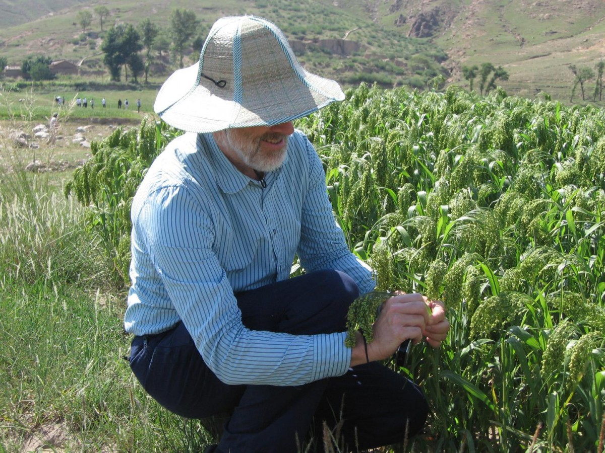 Professor Martin Jones is pictured with millet in north China. Credit: Martin Jones.