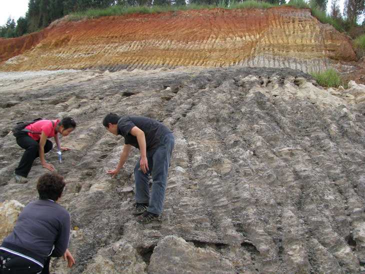 Researchers discovering the first fossilized peach pits after a road construction project in Kunming, China exposed fresh rocks from the late Pliocene, more than 2.5 million years old. Several subsequent tests validated the age of the fossils. Image: Tao Su / Xishuangbanna Tropical Garden