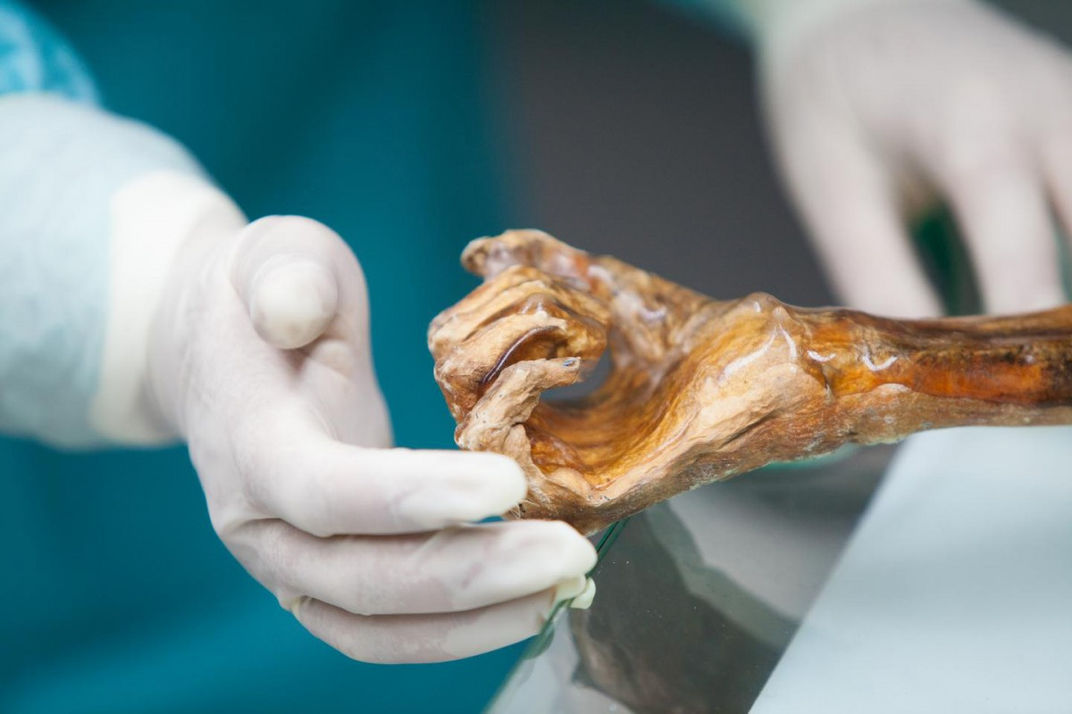 The Iceman's hand. Credit: South Tyrol Museum of Archaeology/EURAC/M.Lafogler.