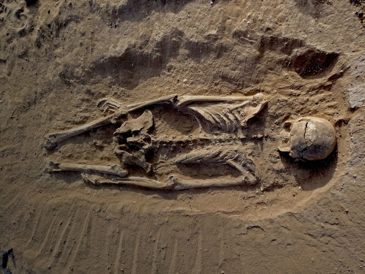 Skeleton of man lying prone in lagoon sediments with multiple lesions to skull.