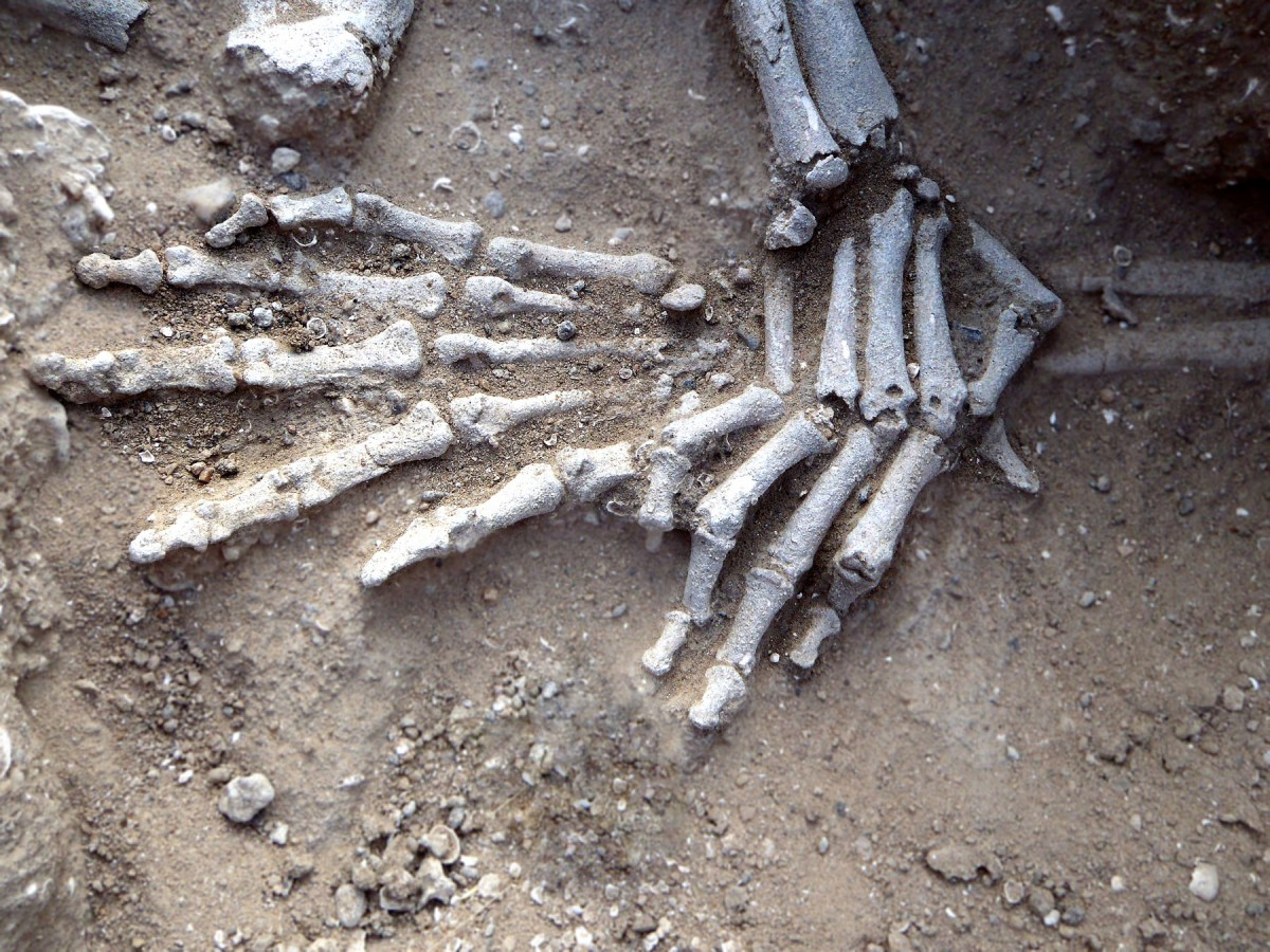 Detail of hands of in situ skeleton. Position suggests they had been bound.