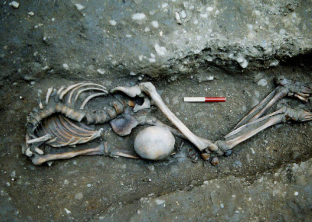 One of the skeletons excavated by the York Archaeological Trust at Driffield Terrace in York.