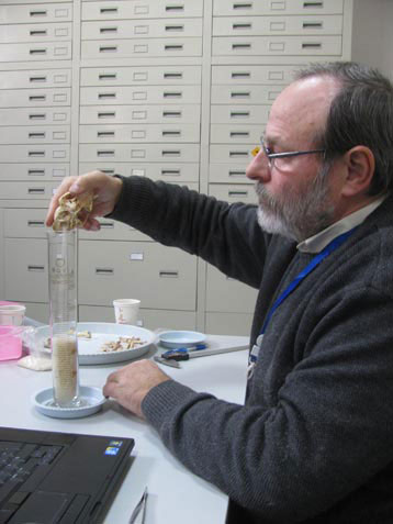 J.-D Vigne using rice grains to measure the cranial capacity of a Neolithic cat from Wuzhuangguoliang (Shaanxi, 3200-2800 BC) in the archaeozoology laboratory of the Shaanxi Provincial Institute of Archaeology in Xian. Photo Credit: J. D. Vigne-CNRS/MNHN.