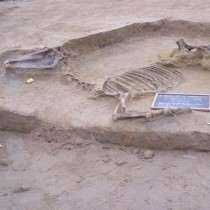 Another horse burial found in Faliron