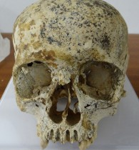 Bronze Age human remains come under scrutiny by archaeologist