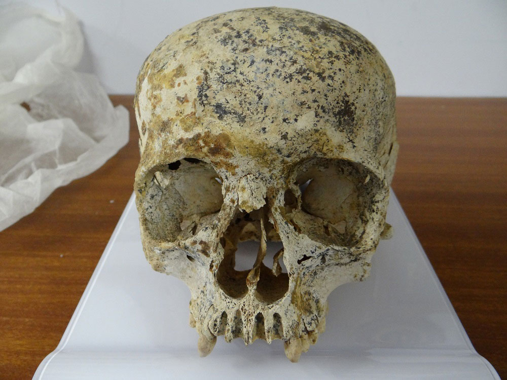 Aspect of the skull found in Achavanich. Photo Credit: Maya Hoole.