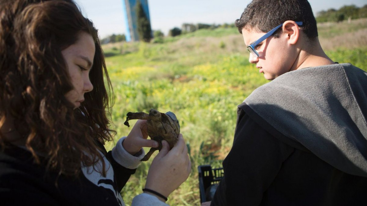 Childrem from Hakfar Hayrok school working on a paper on endemic tortoises: The only ones left in Israeli nature today are a titchy bunch. Credit: Tomer Appelbaum.