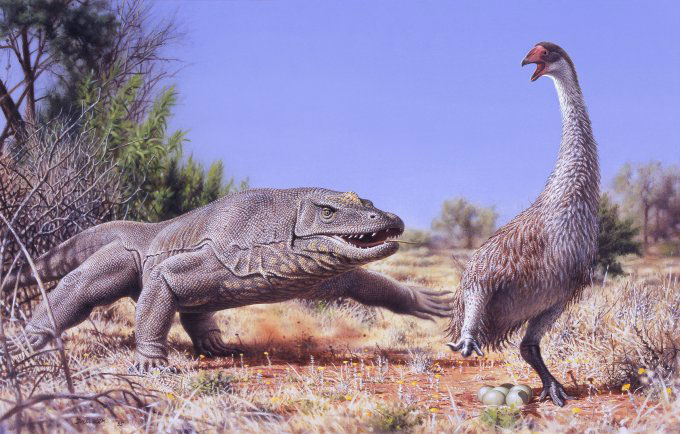 An illustration of the giant, flightless bird known as Genyornis newtoni, surprised on her nest by a 1-ton predatory lizard named Megalania prisca in Australia roughly 50,000 years ago. Illustration by Peter Trusler, Monash
