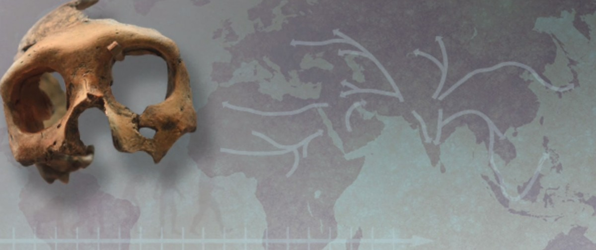 """People living today who are of European, Eurasian and Asian descent have well-identified Neanderthal-derived segments in their genome. These fragments are traces of interbreeding that followed the """"out of Africa"""" human migration dating to about 60,000 years ago."""