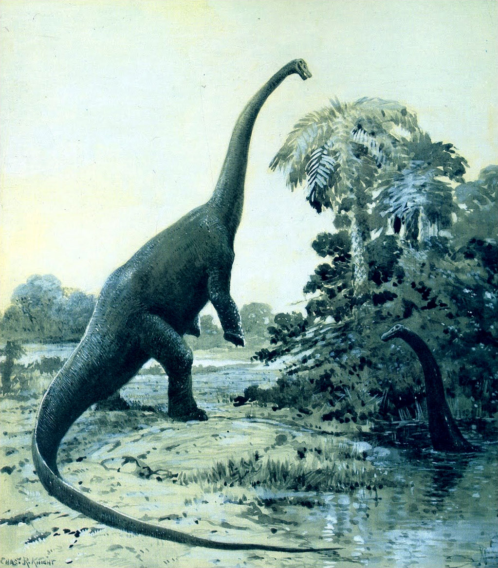 Restoration of a rearing Diplodocus by Charles R. Knight, 1911.