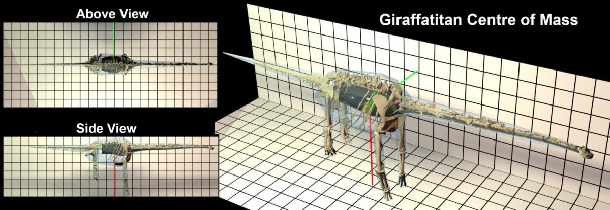 This is a Giraffatitan model of a Sauropod. Credit: Dr Peter L Falkingham (Liverpool John Moores University)