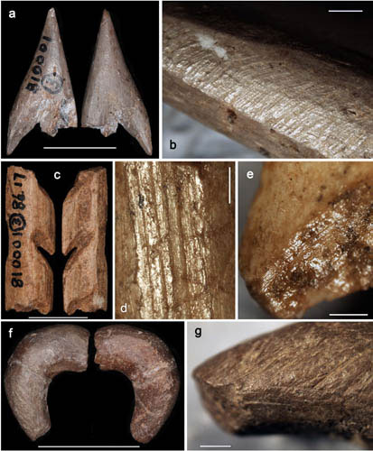 Traces of manufacture on Ma'anshan bone artefacts. Photo Credit: ZHANG Shuangquan.