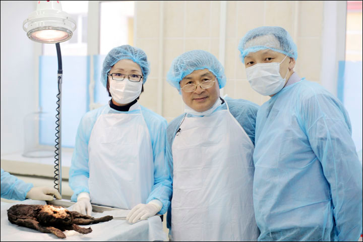 Scientists are excited that the puppy is so well preserved. Professor Hwang Woo-suk hopes to eventually clone the animal. Photo Credit Ivan Tishchenko/Siberian TImes.
