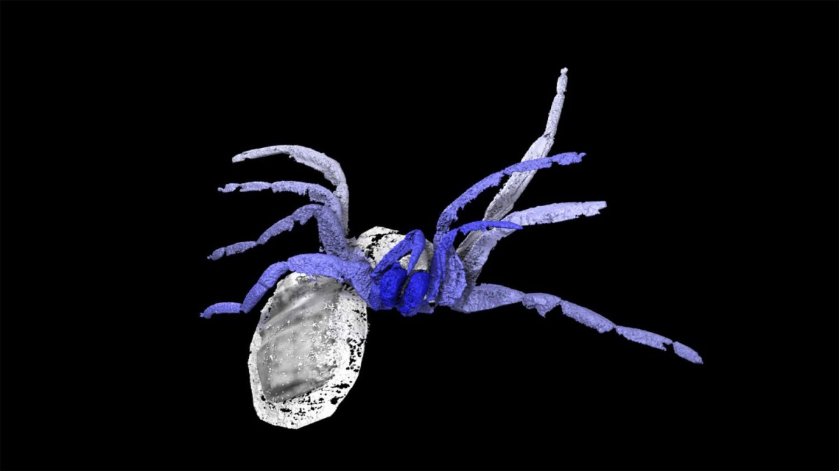 Digital Reconstruction of Idmonarachne brasieri. Photo Credit: Phys.org/The Royal Society publishing.