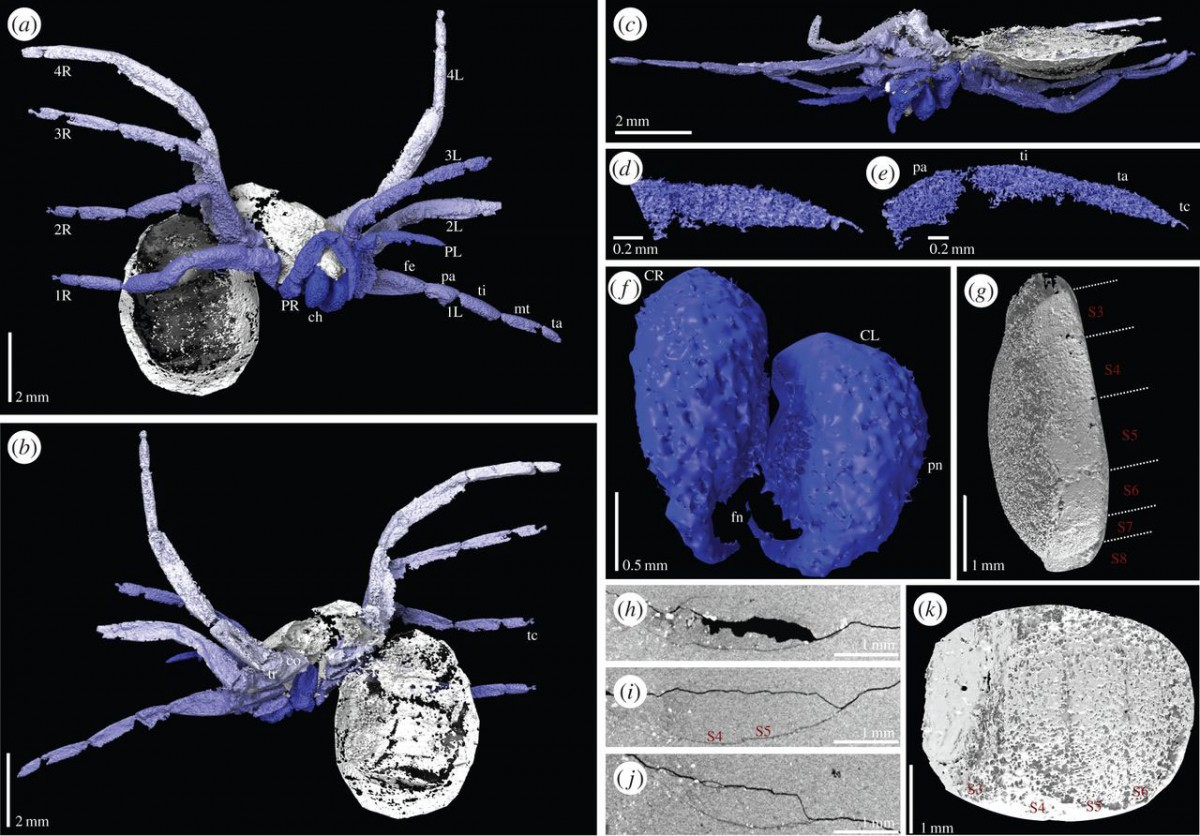 Digital visualization of Idmonarachne brasieri based on laboratory and synchrotron scans of the fossil. Photo Credit: The Royal Society Publishing.