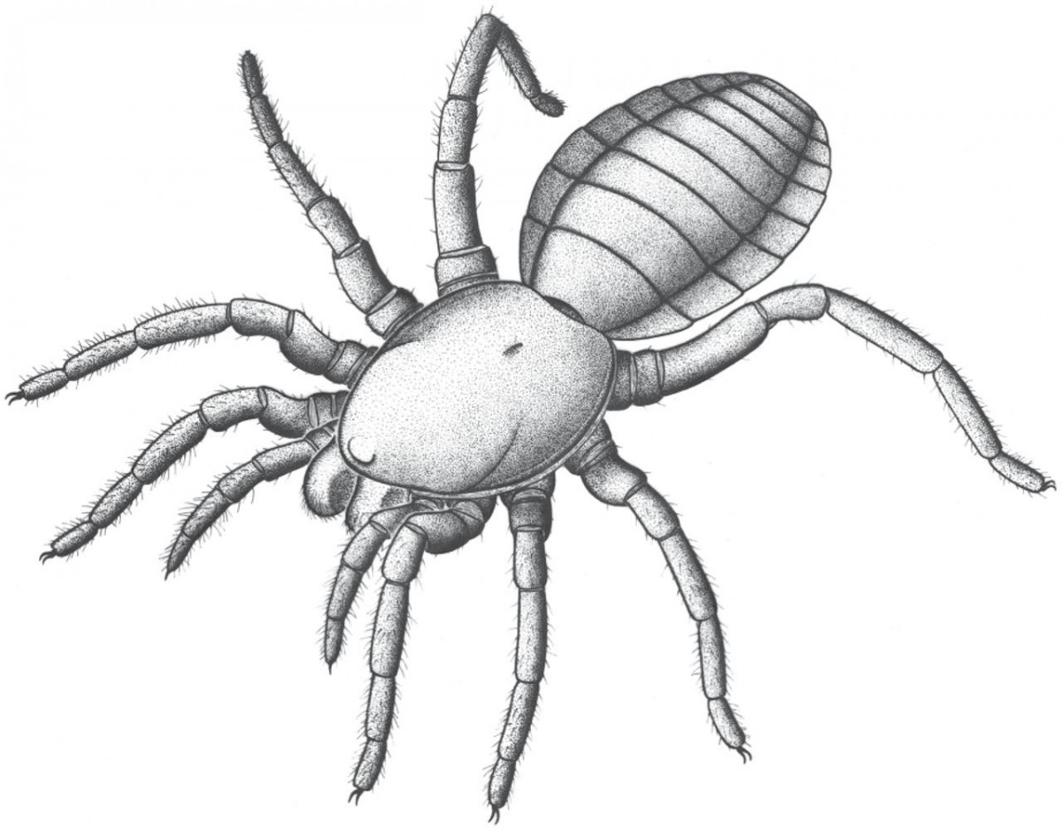 Suggested appearance of Idmonarachne brasieri in life. Photo Credit: The Royal Society publishing