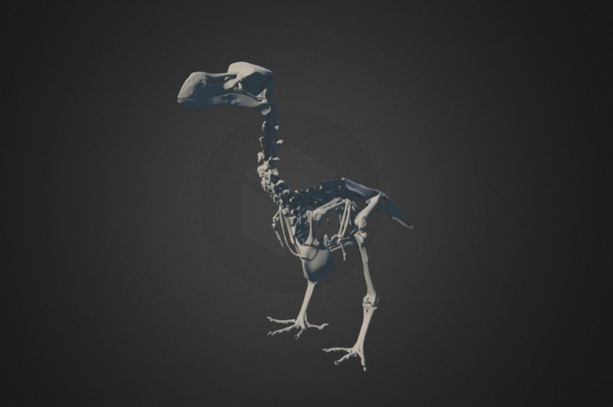 The dodo (Raphus cucullatus), an extinct, giant flightless pigeon once endemic to the island of Mauritius.