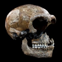 The Neanderthals were 20 percent vegetarian