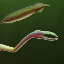 Solving the mystery of the Tully Monster