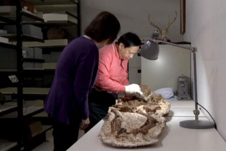 Archaeologists say the skeletal remains of the Taichung area are the earliest trace of human activity in central Taiwan. Photo credit: Reuters.