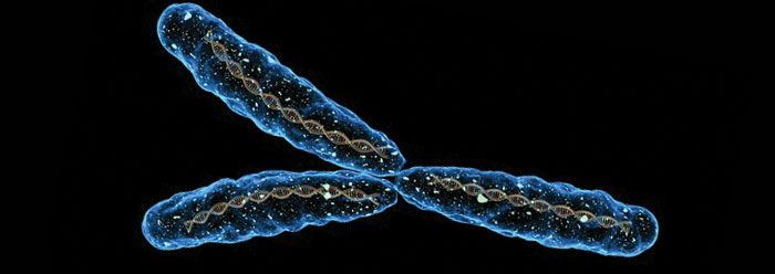 Analysing the Y chromosomes of modern men can tell us about the lives of our ancestors. The Y chromosome is only passed from father to son and so is wholly linked to male characteristics and behaviours.