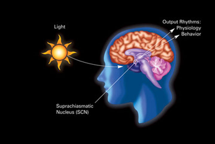 Fig. 7. Sunlight is the main factor determining our biological clock and the levels of sleep/alertness.