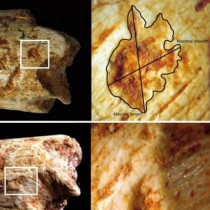 Hominins may have been food for carnivores 500,000 years ago