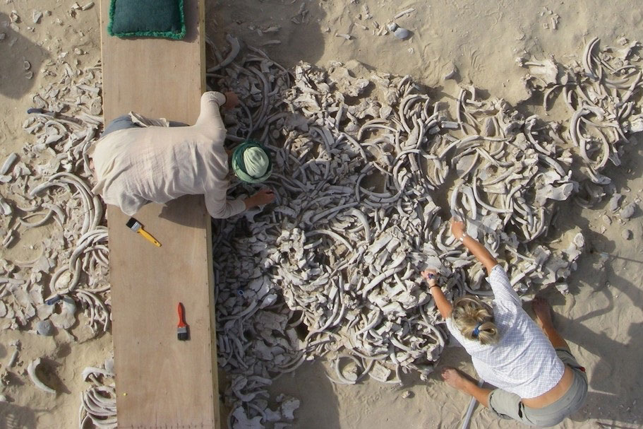 Excavations on the island site of Akab in Umm Al Quwain. Photo Credit: F. Borgi/The National.