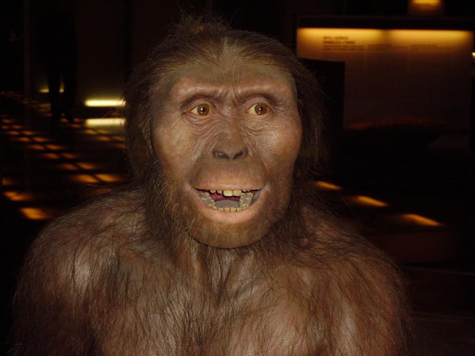 Australopithecus afarensis, the ultimate human ancestor. wikimedia, CC BY-SA