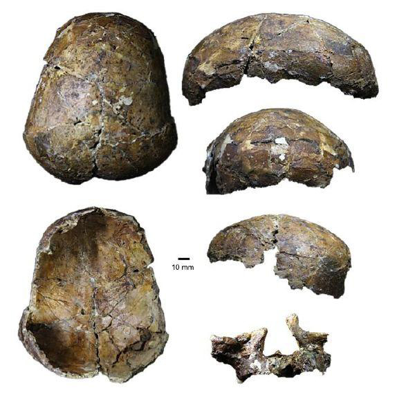 Bones from the 37,000 year old Deep Skull from Niah Cave in Sarawak. Image credit: Curnoe