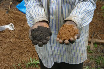 From analysing 150 sites in northwest Liberia and 27 sites in Ghana researchers found that these highly fertile soils contain 200-300 percent more organic carbon than other soils and are capable of supporting far more intensive farming. Photo credit: Victoria Frauisn