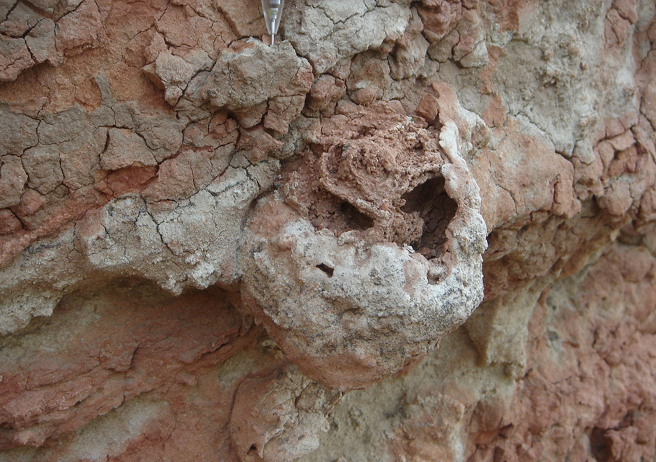 A 25 million-year-old termite nest with the remains of a