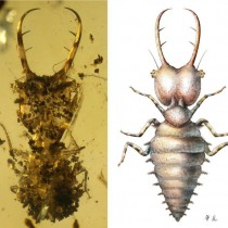 Amber fossils reveal ancient insect camouflage behavior