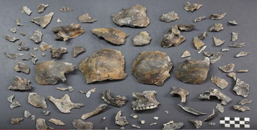 The skull fragments found in the grave near Gyeongju, the historic capital of the Silla Kingdom.