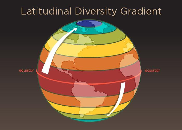 Today, plant and animal biodiversity across the globe tends to be highest at the equator and diminishes as one moves to higher latitudes. This pattern, called the latitudinal diversity gradient, has not always existed, new research finds. Credit: Graphic by Julie McMahon